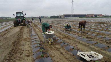 Photo of بلجيكا تحتاج الى عشرات الآلاف من العمال للعمل في قطاع الفلاحة