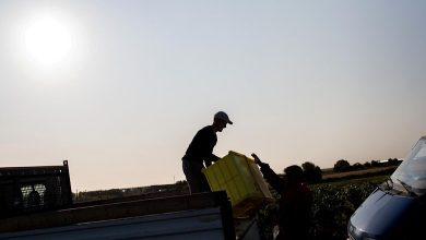 Photo of دعوى قضائية تتسبب في فضح المعاناة التي يعيشها المهاجرون الغير شرعيون في حقول العنب المخصص لصناعة الشامبانيا
