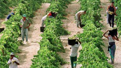 Photo of المزارعون الإسبان يهاجمون الحكومة المغربية بسبب شروطها لفتح الحدود